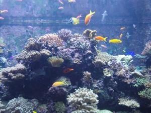 аквариум на сентозе, кораллы