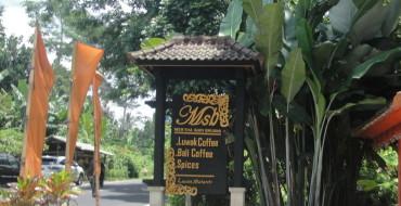 Кофейная плантация на Бали