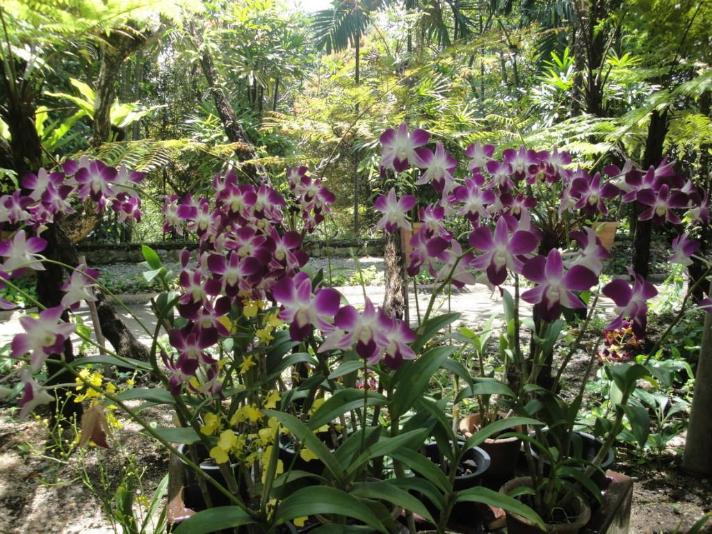 Парк орхидей