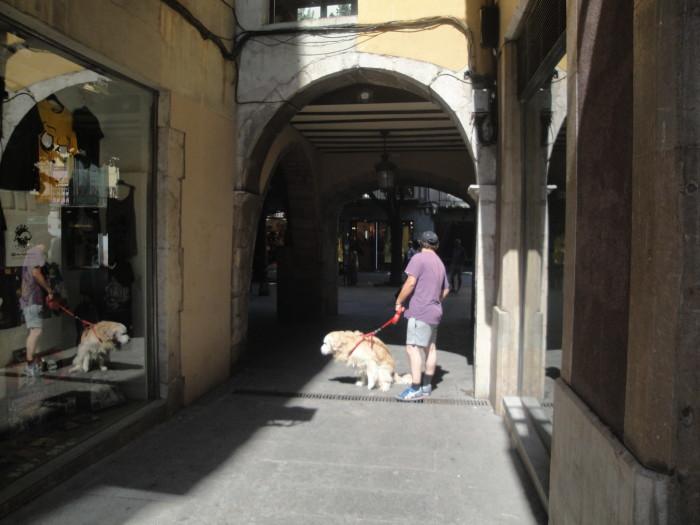 Выгул собак в Жироне