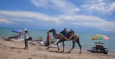 Верблюд на Иссык-Куле