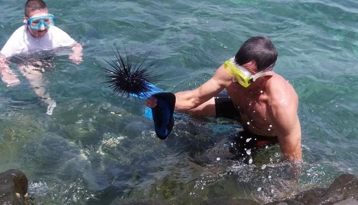 Морской ёж