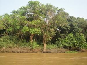 Река Тонлесап