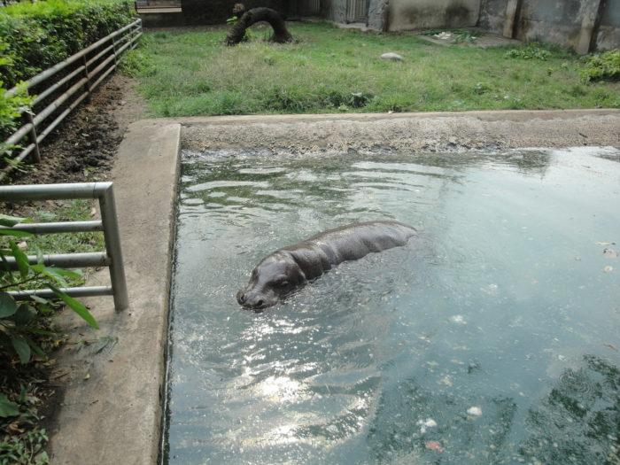 Зоопарк и ботанический сад Сайгона