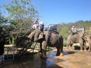 Слоны в парке Прен