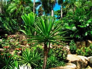 Голубой сад в Нонг Нуч