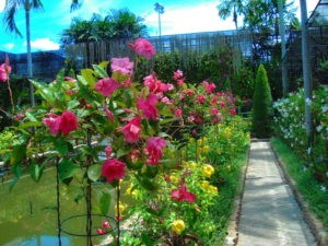 Сад орхидей Паттайя
