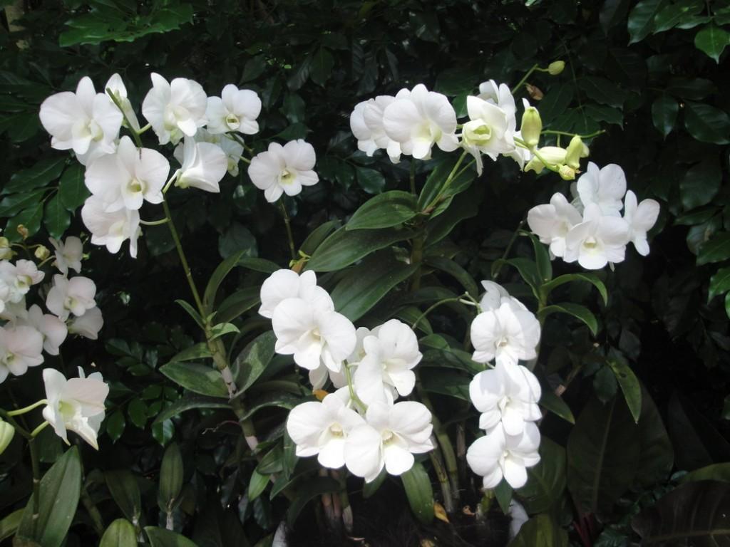 Сад Орхидей в Сингапуре, Сад Орхидей