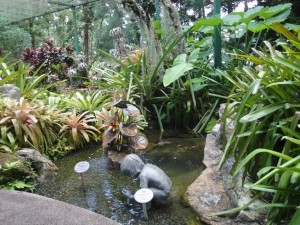 Сад Орхидей Сингапура, Ботанический Сад Сингапура