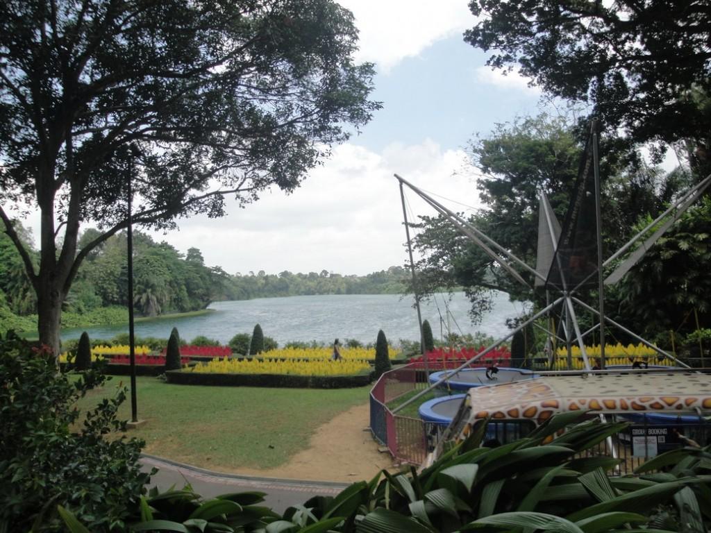 зоопарк в сингапуре