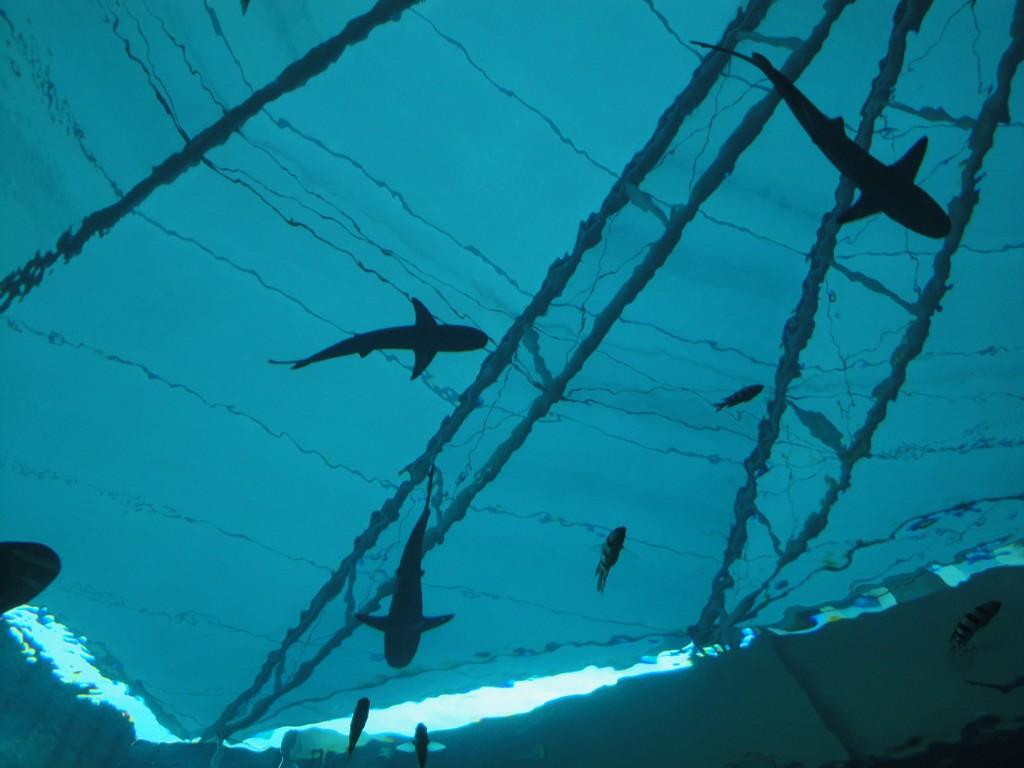 Дельфины в аквариуме на Сентозе, аквариум на Сентозе, лагуна дельфинов