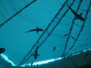 Акулы в аквариуме на Сентозе, аквариум на Сентозе