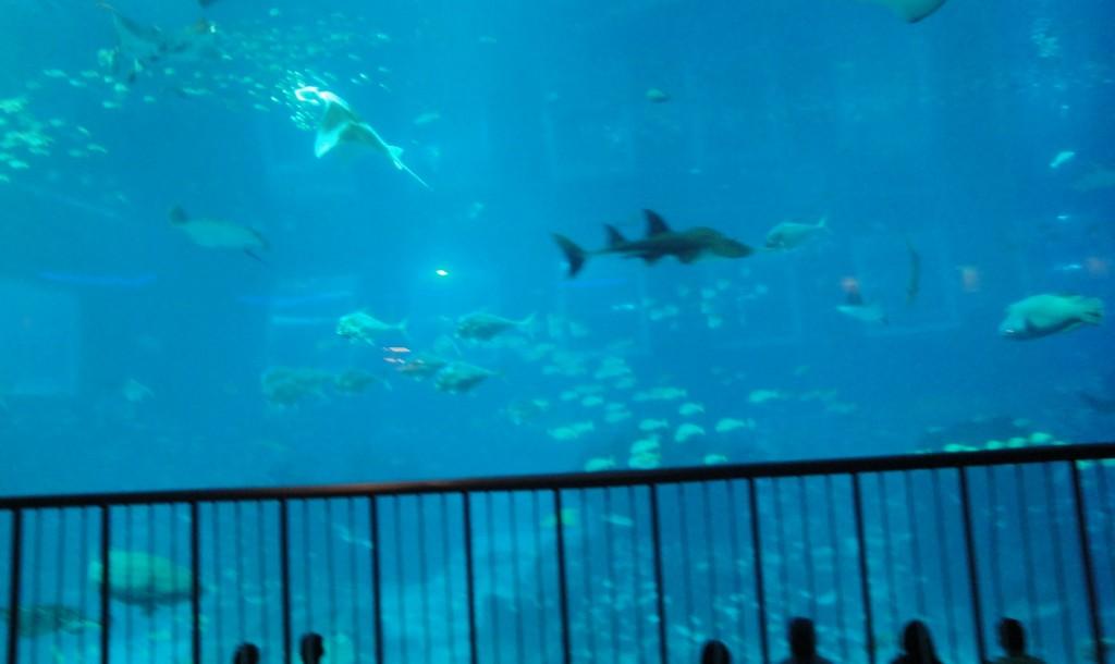 Выход в море из аквариума на Сентозе, аквариум на Сентозе