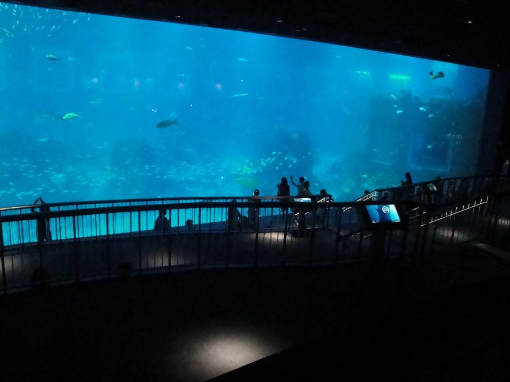 Выход в море на Сентозе, остров Сентоза. аквариум Сентозы
