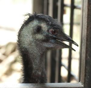 Парк птиц в Куала Лумпур