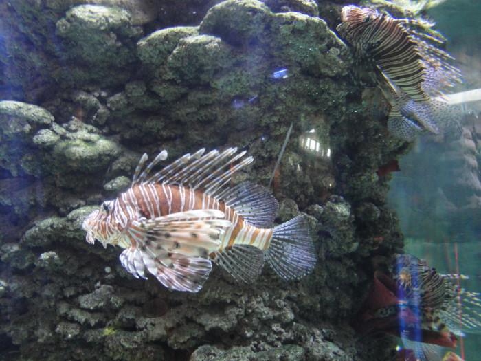 В подводном зоопарке Дубай молла