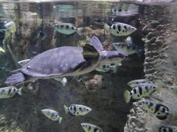 В зоопарке Дубай Молла