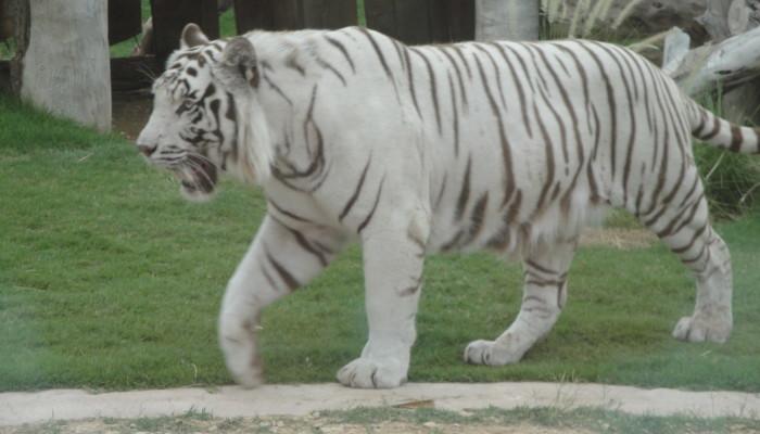 Зоопарк Аль Айна