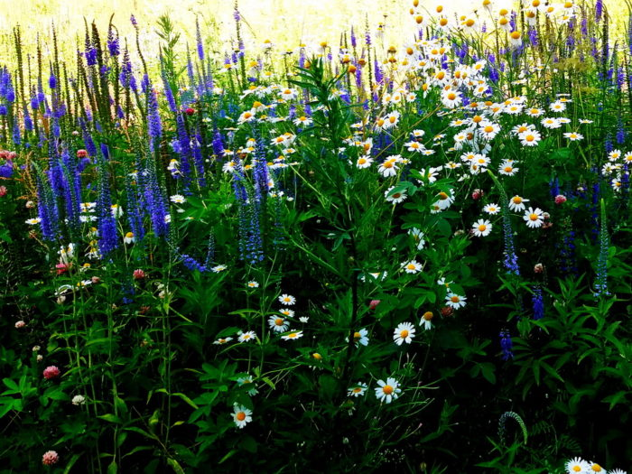Цветы Зарядья
