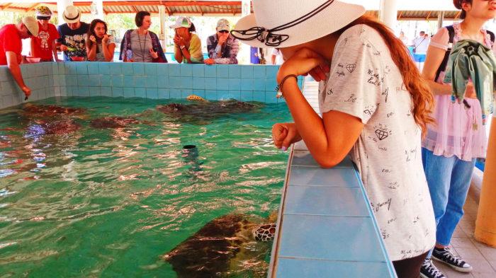 Бассейн с черепахами