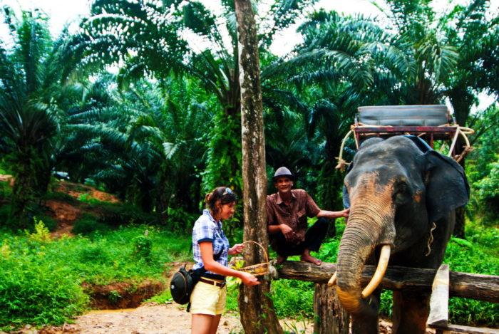 Слонёнок в Таиланде