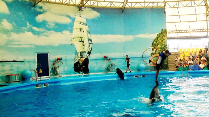 Шоу с дельфинами на пхукете