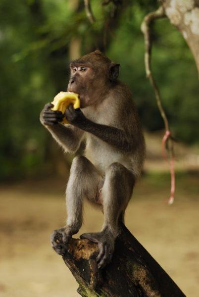 Мартышка с бананом фото