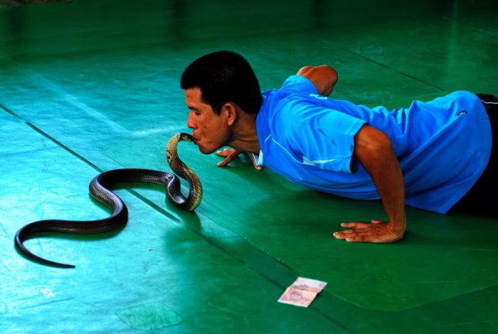Шоу со змеями