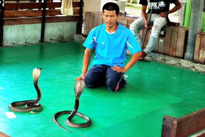 Шоу на змеиной ферме